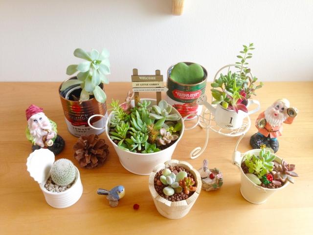 多肉植物の種類